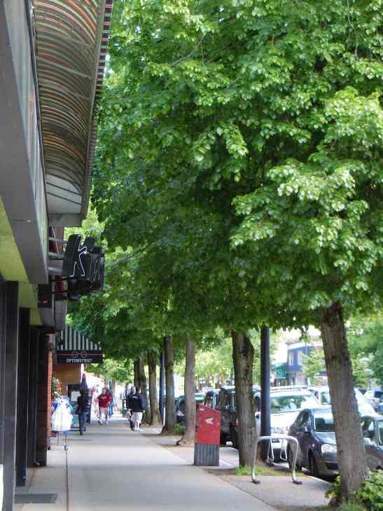 West Broadway Linden trees LR